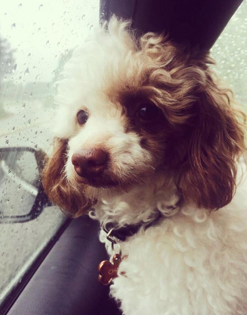 Tiffany Islek X-Mode contract specialist dog charis